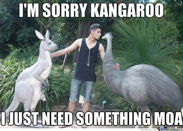 I'm sorry kangaroo i just need something Kangaroo Meme