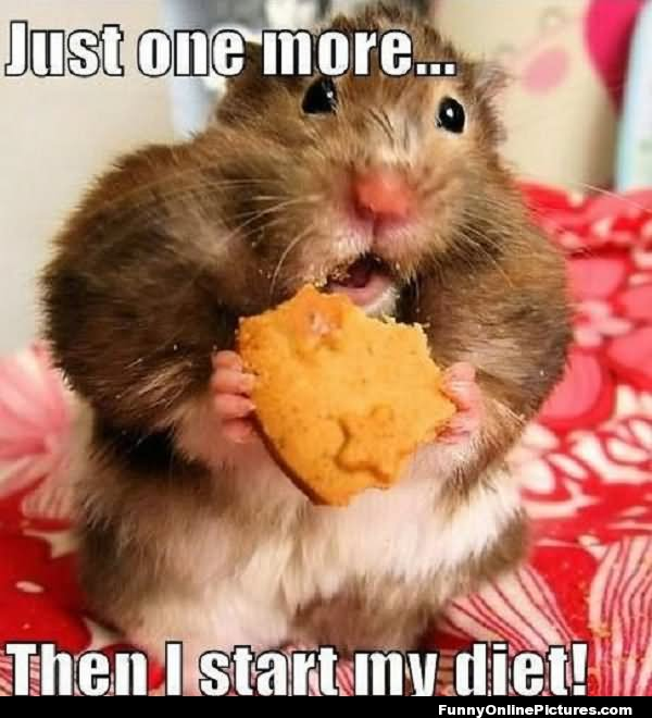 Just one more then i start me diet Hamster Memes