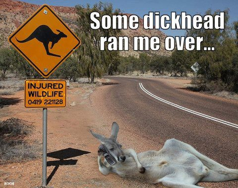 Kangaroo Meme Some dickhead ran me over