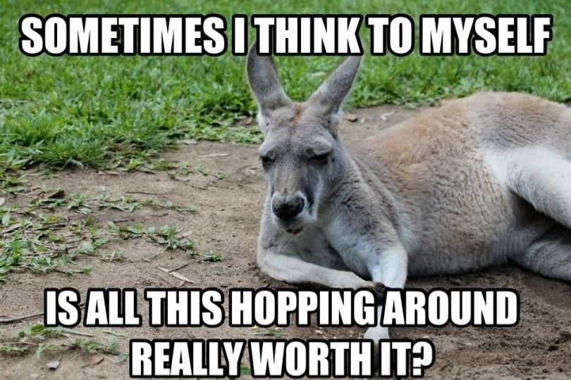 Kangaroo Meme Sometimes i think to myself is all this