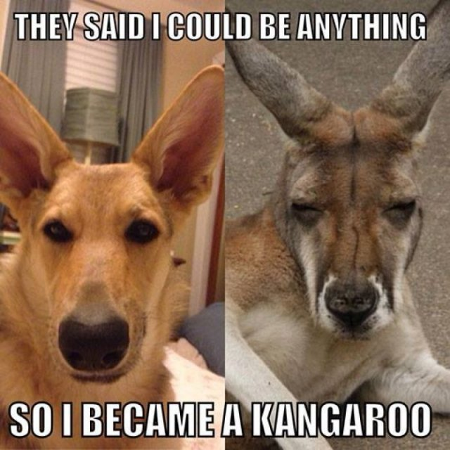 Kangaroo Meme They said i could be anything