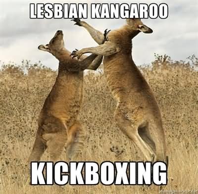 Kangaroo Memes Lesbian kangaroo kickoxing
