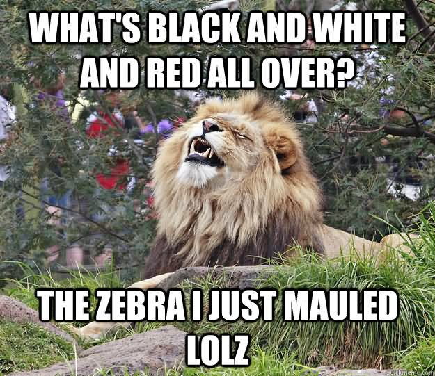 Lion Meme What's black and white and red all over the
