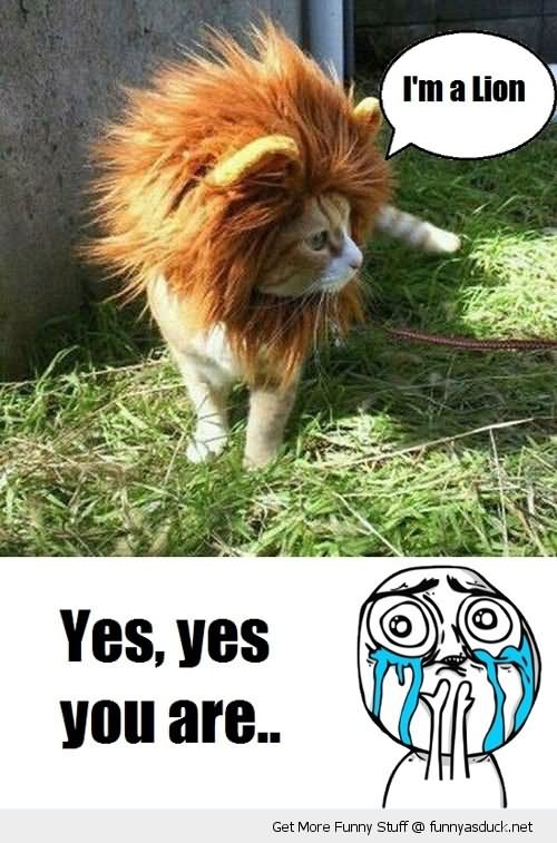 Lion Memes I'm a lion yes yes you are