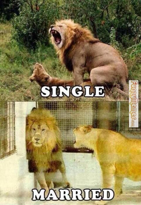 Lion Memes Single married