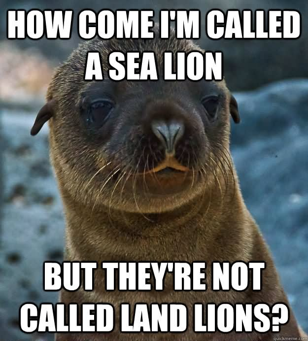 Lion Memes how come I'm called a sea lion