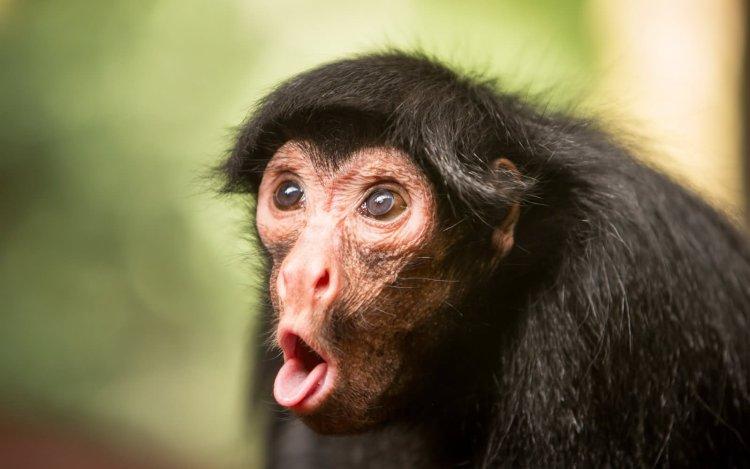 Monkey Meme Funny
