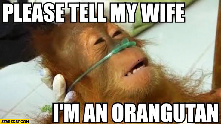 Monkey Meme Please tell my wife I'm an orangutan