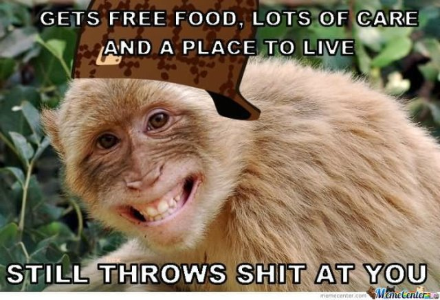 Monkey Memes Gets free food lots of care and a place