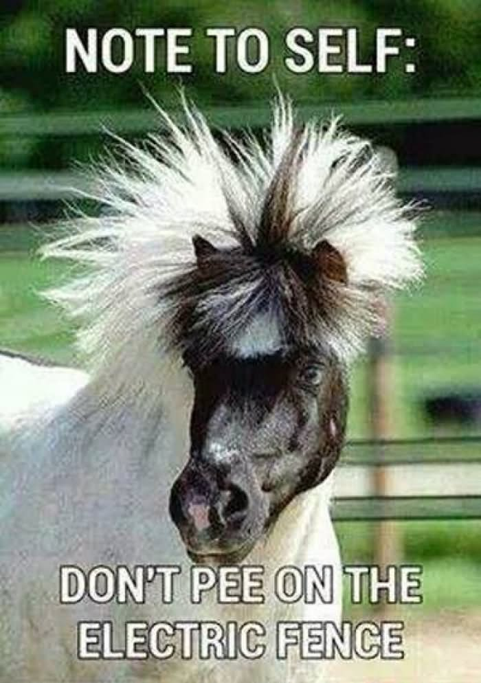 Note to self don't pee on the electric fence Horse Meme