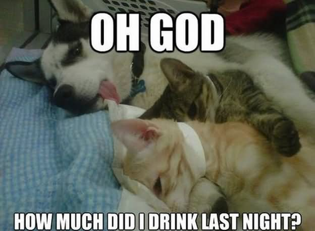 Oh god how much did i drink last night Dog Memes