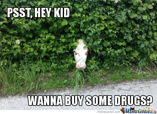 Psst hey kid wanna buy some drugs Cow Meme