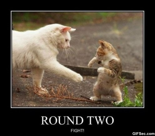 Round two fight Fight Meme