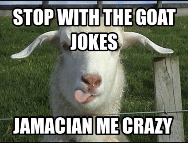 Stop with the goat jokes jamacian me crazy Goat Memes