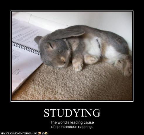 Studying the world's leading cause Bunnies Memes