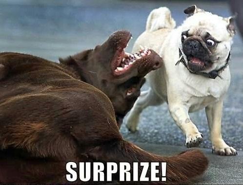 Surprise Dog Memes