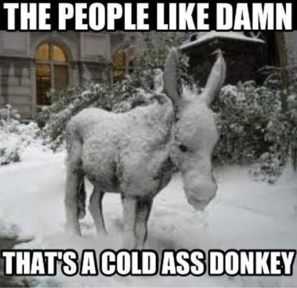 The people like damn that's a cold ass donkey Donkey Meme
