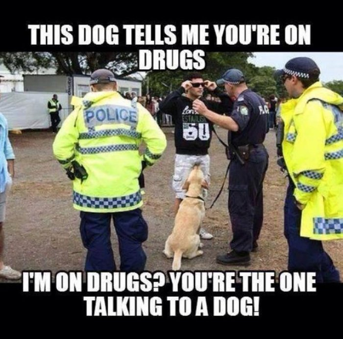 This dogs tells me you're on drugs Drugs Meme