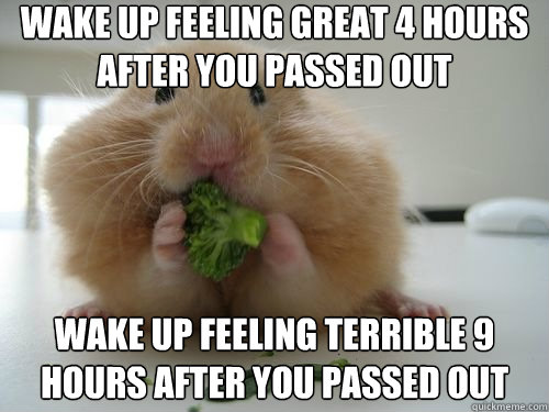 Wake up feeling great 4 hours after you passed out Hamster Memes