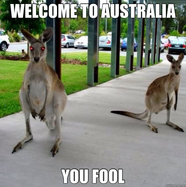 Welcome to Australia you fool Camel Meme
