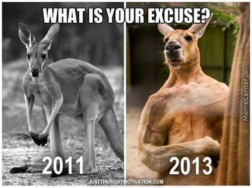 What is your excuse 2011 Kangaroo Meme