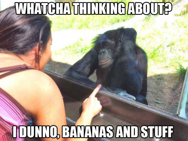 Whatcha thinking about i dunno bananas and stuff Monkey Memes