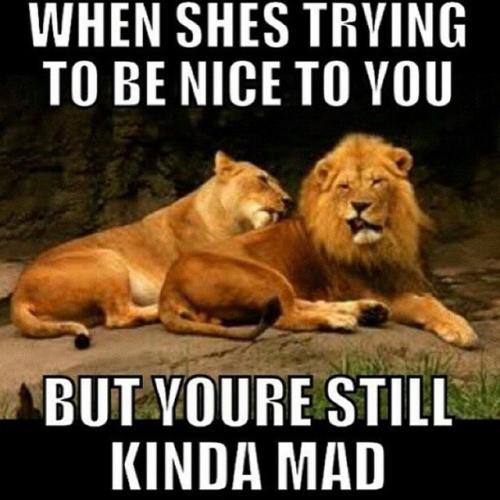 When she's trying to be nice to you but you're still Lion Meme