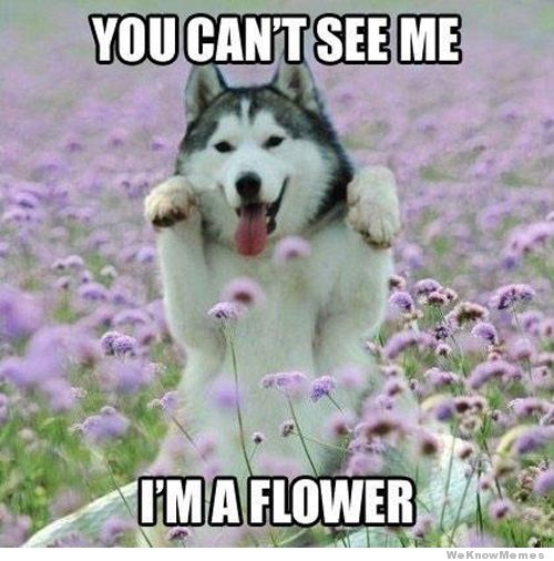 You cant see me I'm a flower Dog Memes