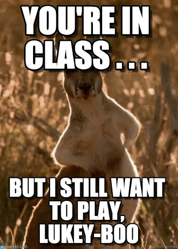 You're in class but i still want Kangaroo Memes