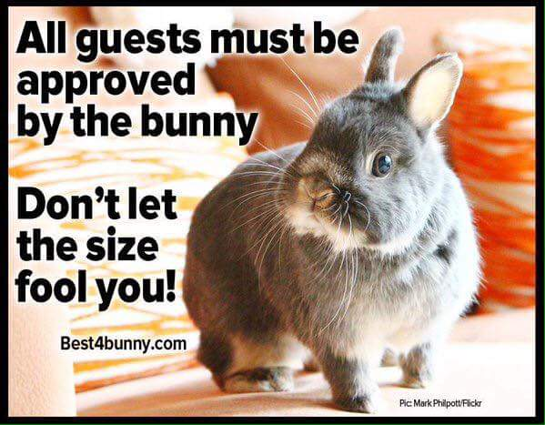 All guests must be approved by the bunny Rabbit Memes