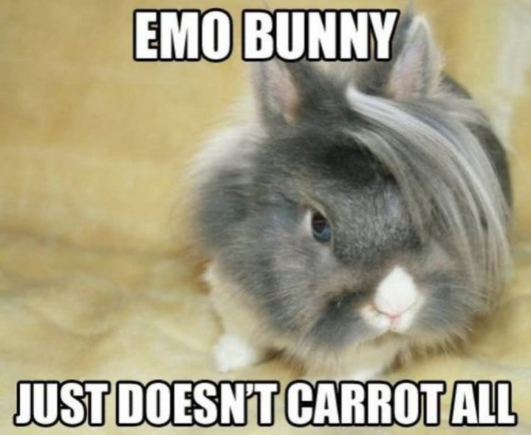 Emo bunny just doesn't carrot all Rabbit Memes