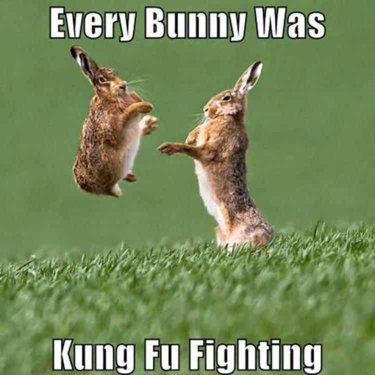 Every bunny was kung fu fighting Rabbit Meme