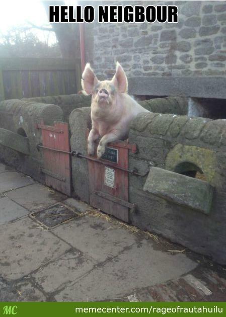 Hello neigbour Pigs Meme