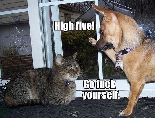 High five go fuck yourself School Memes