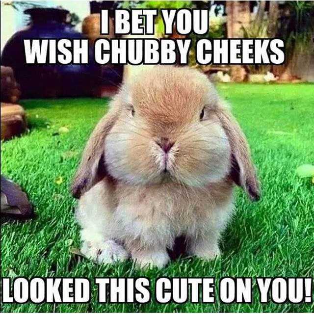 I bet you wish chubby cheeks looked this Rabbit Memes