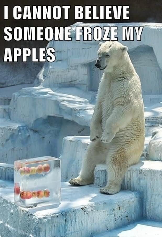 I cannot believe someone froze my apples Pants Meme