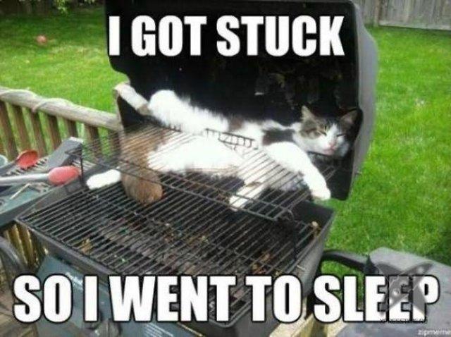 I got stuck so i went to sleep Pet Memes