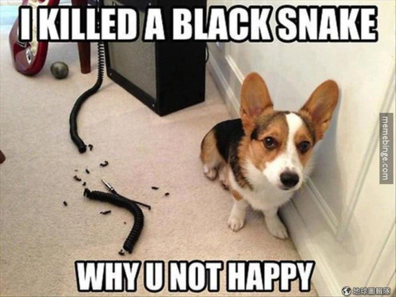 I killed a black snake why u not happy Pet Meme