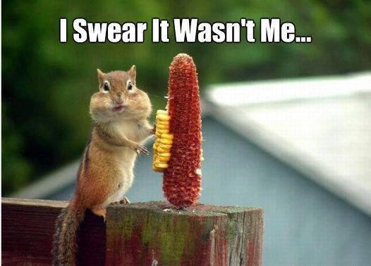 I swear it wasn't me Squirrel Memes