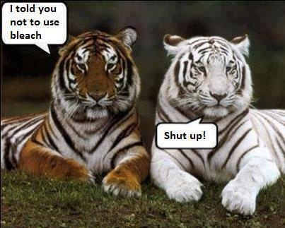 I told you not to use bleach Tiger Meme