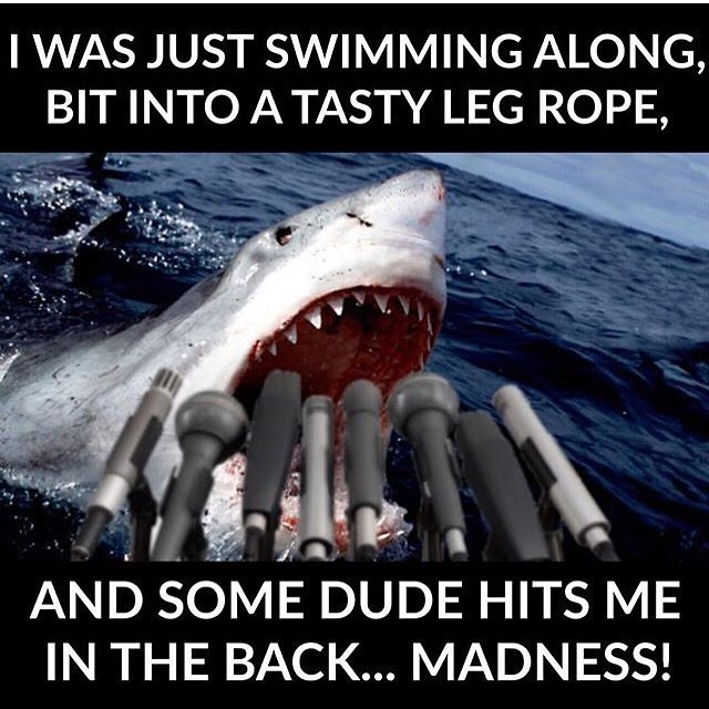 I was just swimming along bit into a tasty leg rope Surfing Meme