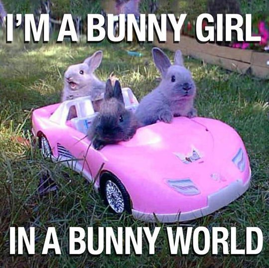 I'm a bunny girl in a bunny world Rabbit Memes