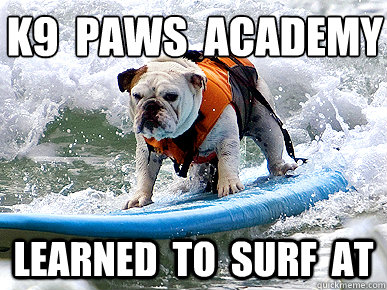 K9 paws academy learned to surf at Surfing Meme