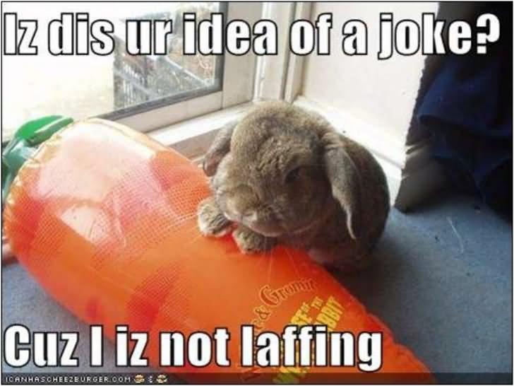 Lz dis ur idea of a joke cuz l iz not laffing Rabbit Memes