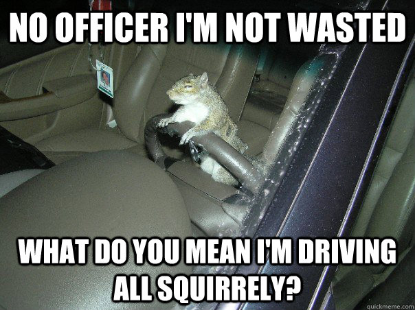 No officer im not wasted what do you mean im Squirrel Meme