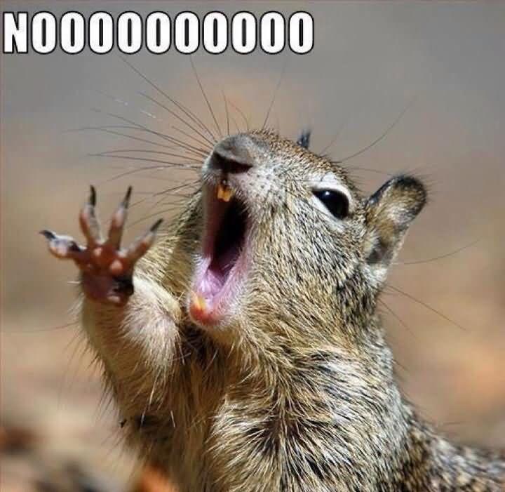 Noooooooo Squirrel Meme