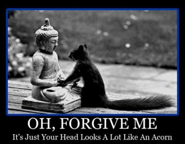 Oh forgive me it's just your head Squirrel Memes