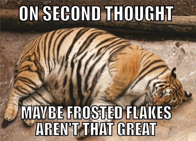 On second thought maybe frosted flakes aren't that great Tiger Meme