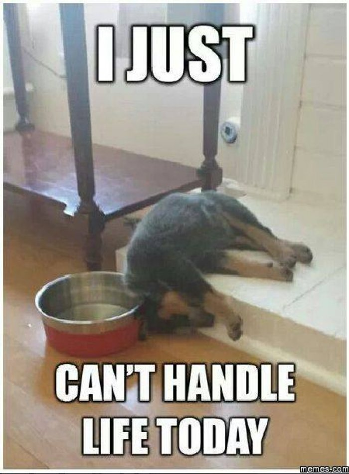Pet Meme I just can't handle life today