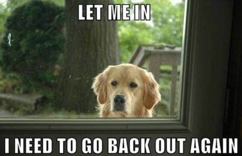 Pet Meme Let me in i need to go back out again
